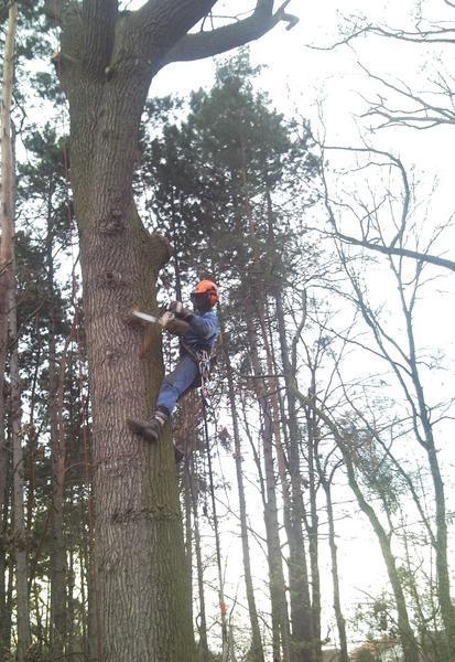 Rizikové ošetření stromů