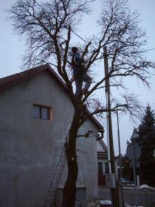 Ošetření stromů