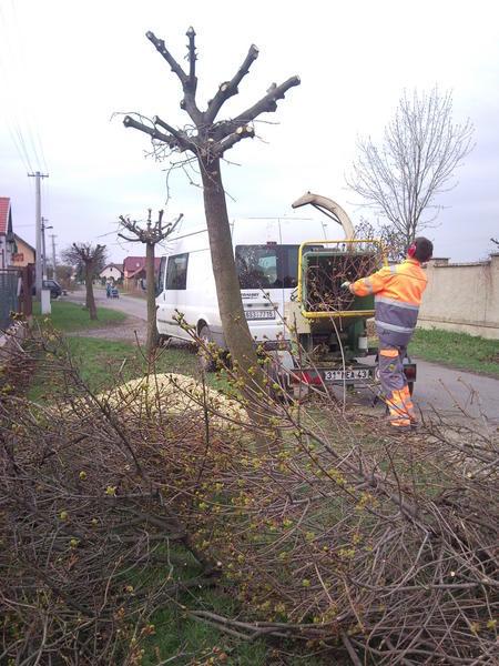 tvarovaci-rez-stromu_large2 (1)