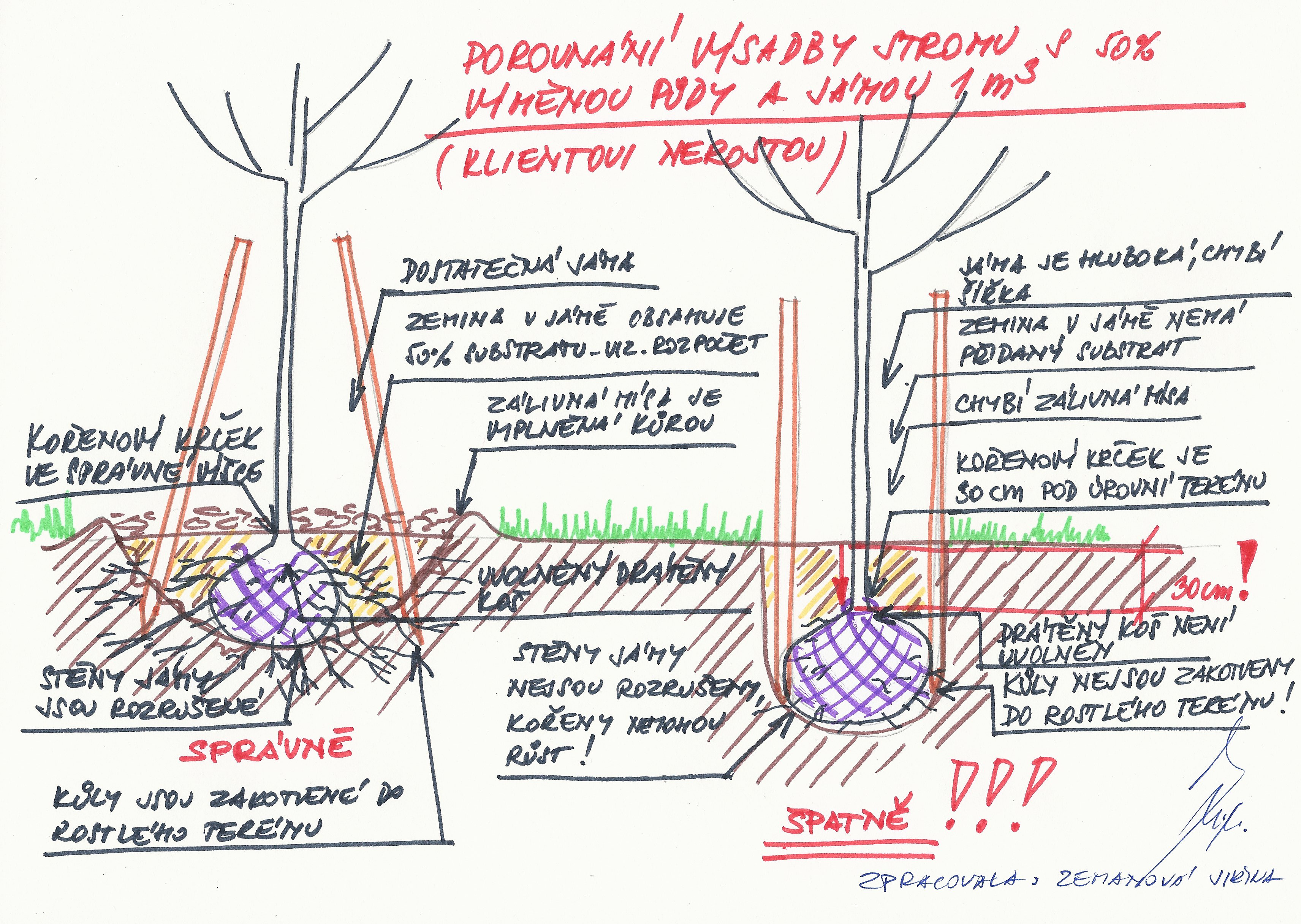 porovnání výsadby stromu